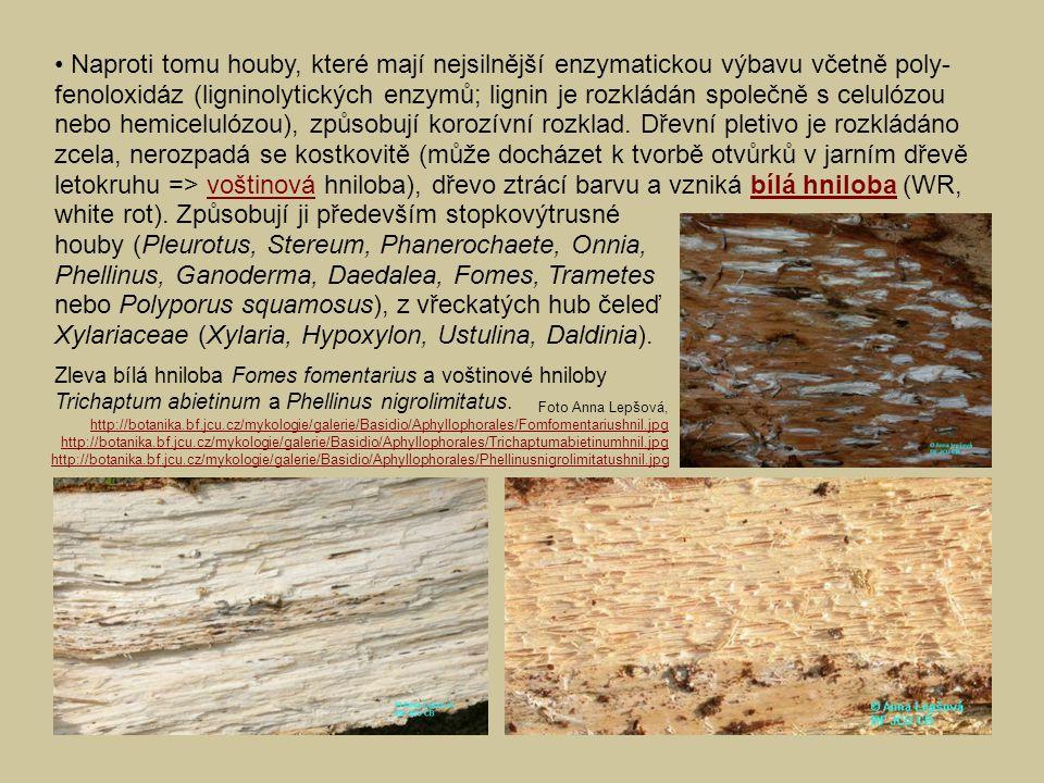 houby (Pleurotus, Stereum, Phanerochaete, Onnia,