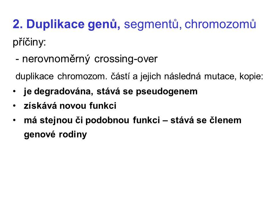 2. Duplikace genů, segmentů, chromozomů