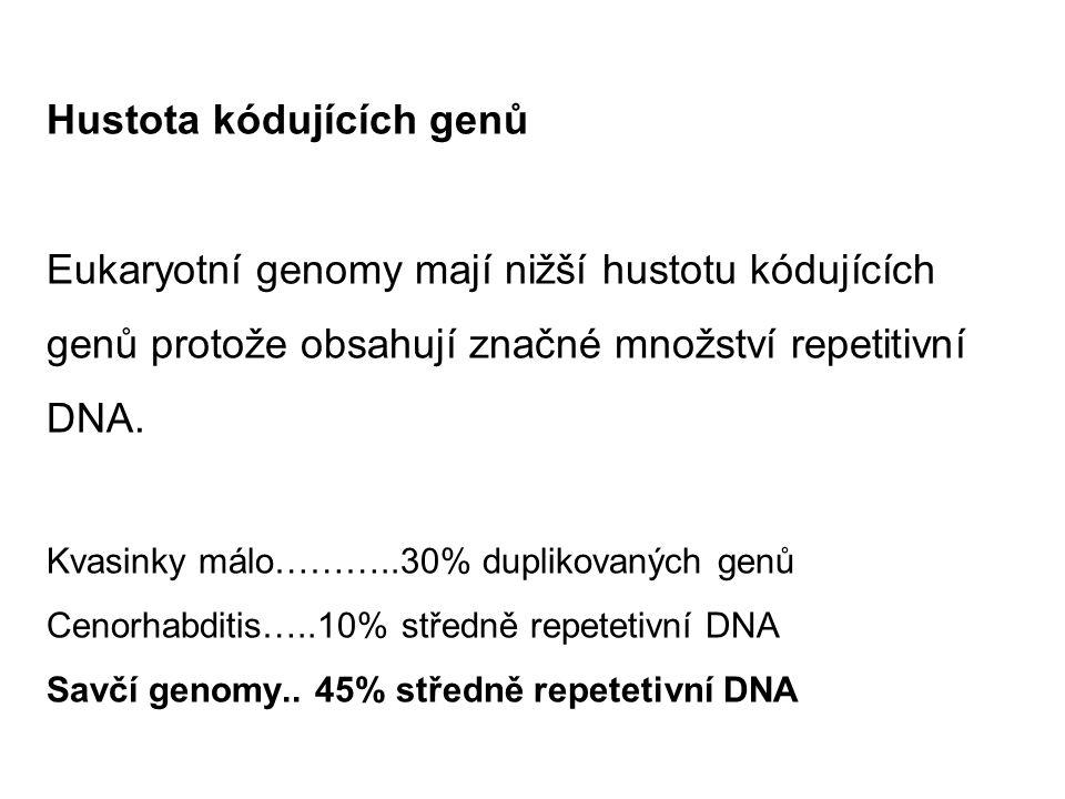 Hustota kódujících genů Eukaryotní genomy mají nižší hustotu kódujících genů protože obsahují značné množství repetitivní DNA. Kvasinky málo………..30% duplikovaných genů Cenorhabditis…..10% středně repetetivní DNA Savčí genomy.. 45% středně repetetivní DNA