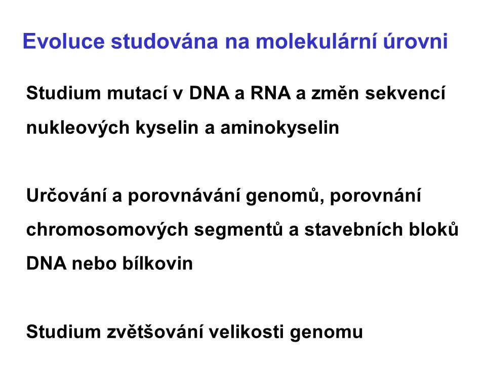 Evoluce studována na molekulární úrovni