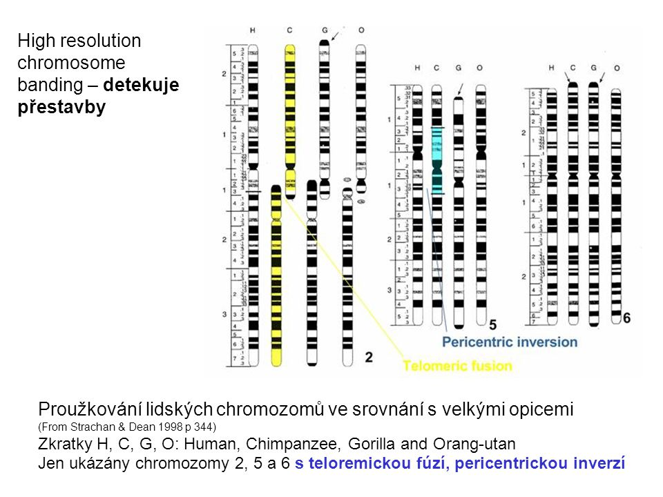 High resolution chromosome banding – detekuje přestavby