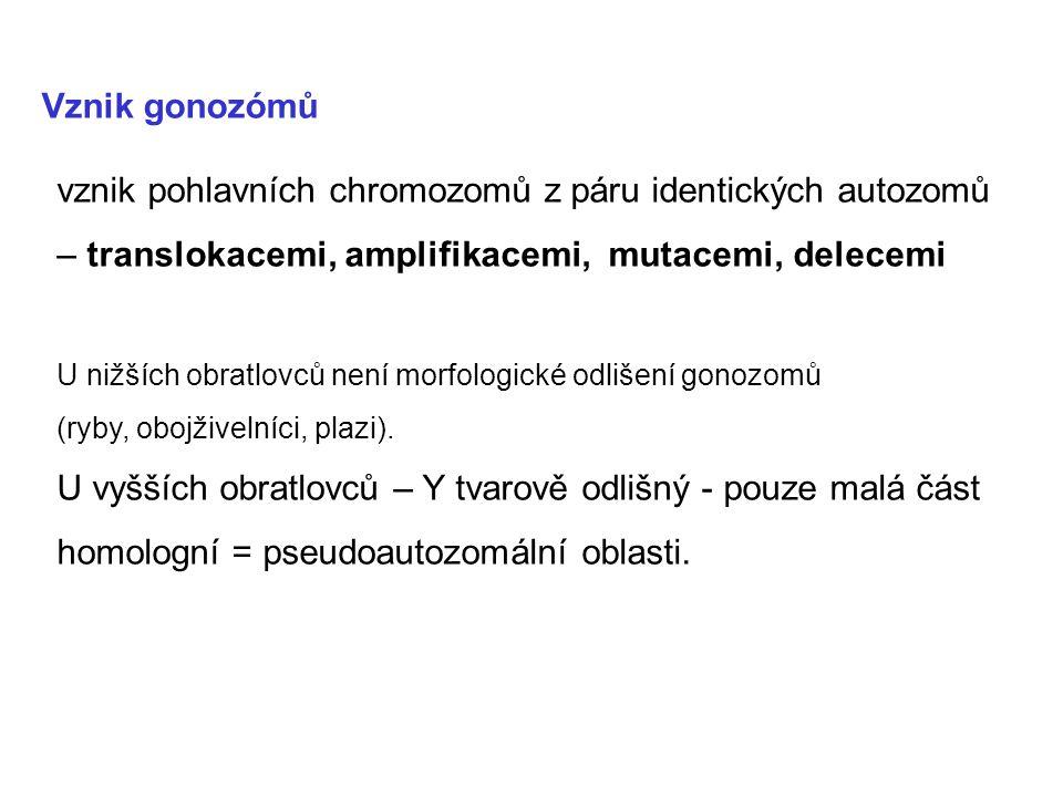 Vznik gonozómů vznik pohlavních chromozomů z páru identických autozomů – translokacemi, amplifikacemi, mutacemi, delecemi.