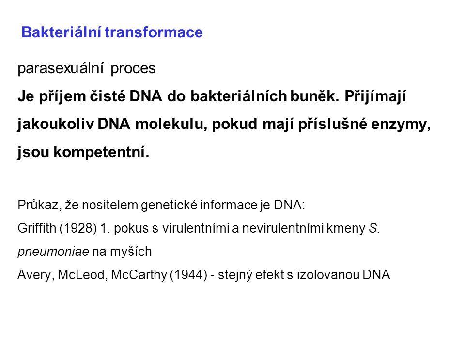 Bakteriální transformace