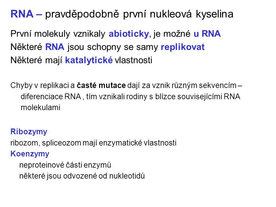 RNA – pravděpodobně první nukleová kyselina