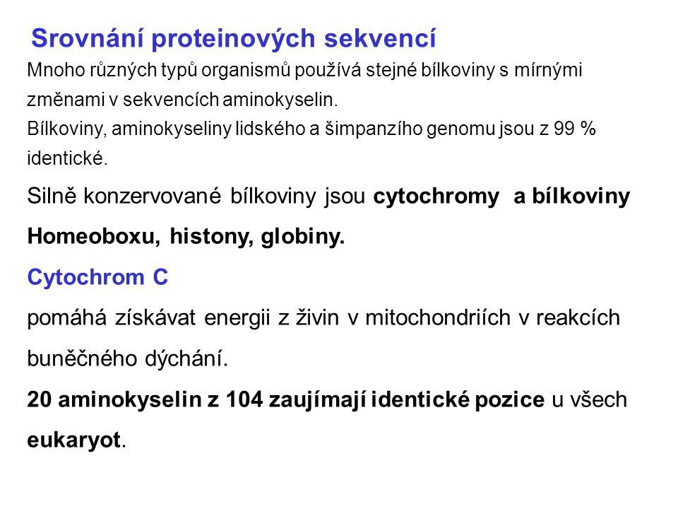 Srovnání proteinových sekvencí