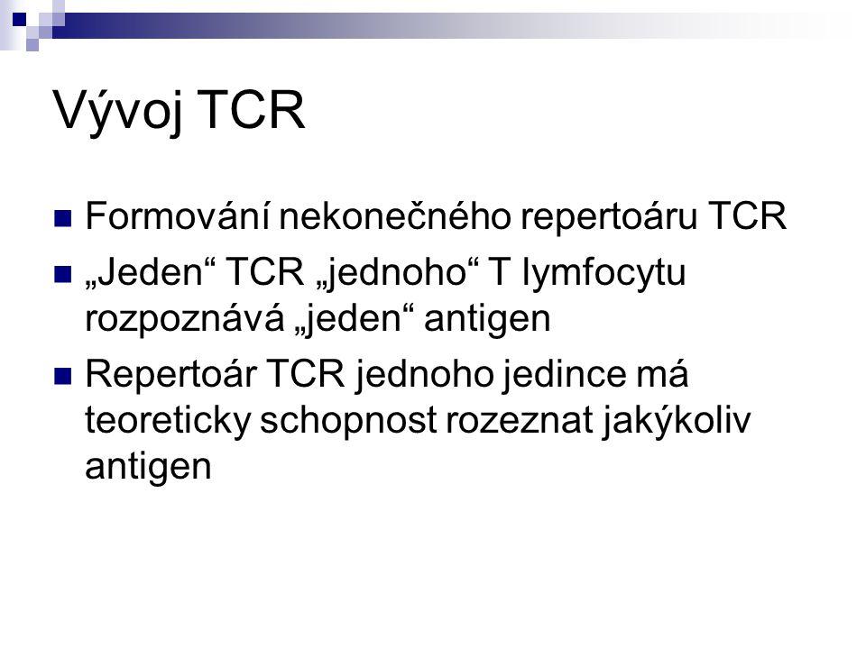 Vývoj TCR Formování nekonečného repertoáru TCR