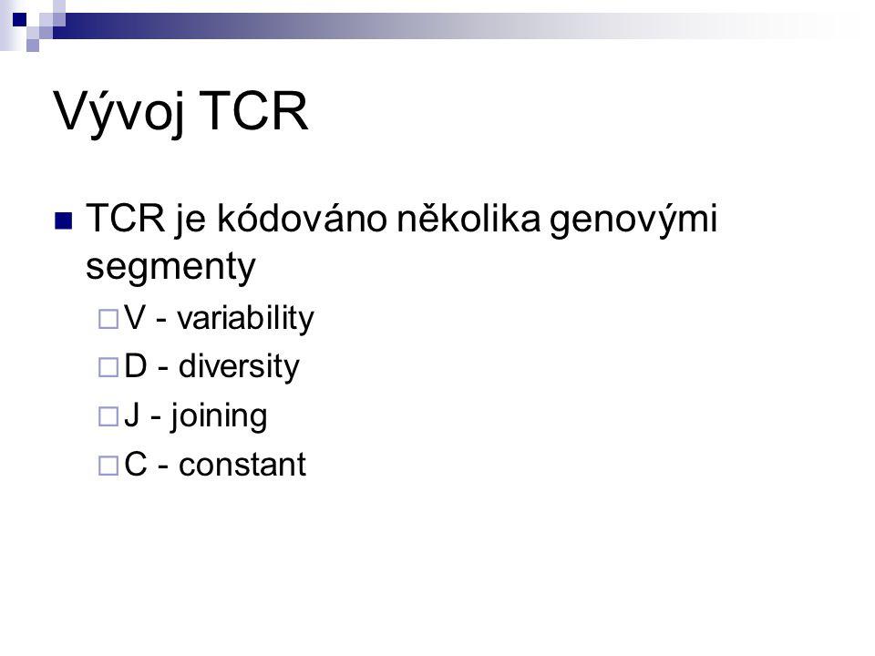Vývoj TCR TCR je kódováno několika genovými segmenty V - variability