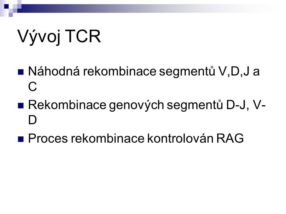 Vývoj TCR Náhodná rekombinace segmentů V,D,J a C