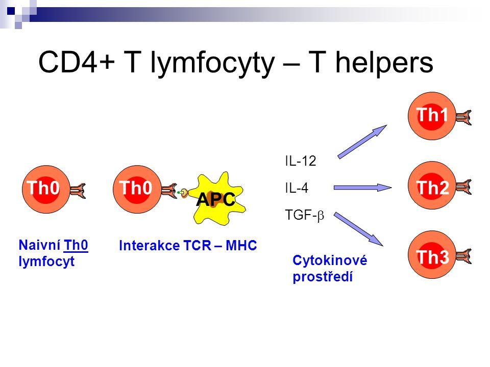 CD4+ T lymfocyty – T helpers
