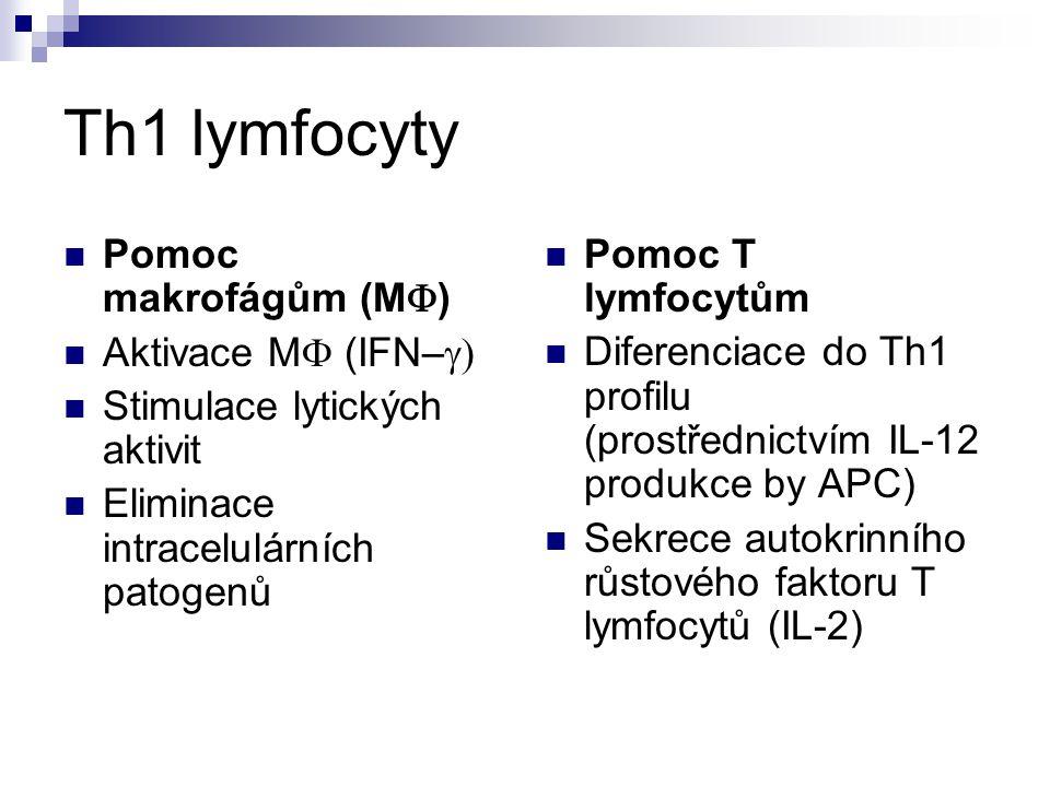 Th1 lymfocyty Pomoc makrofágům (M) Aktivace M (IFN–g)