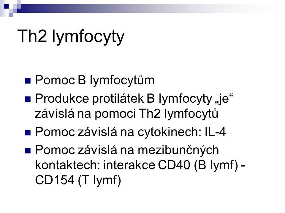 Th2 lymfocyty Pomoc B lymfocytům