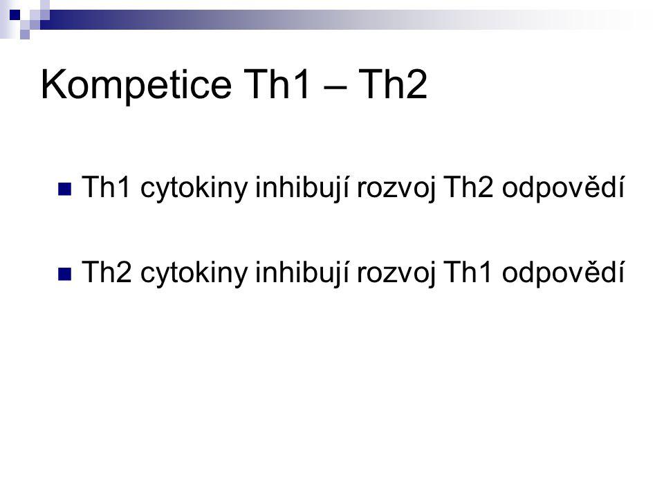 Kompetice Th1 – Th2 Th1 cytokiny inhibují rozvoj Th2 odpovědí