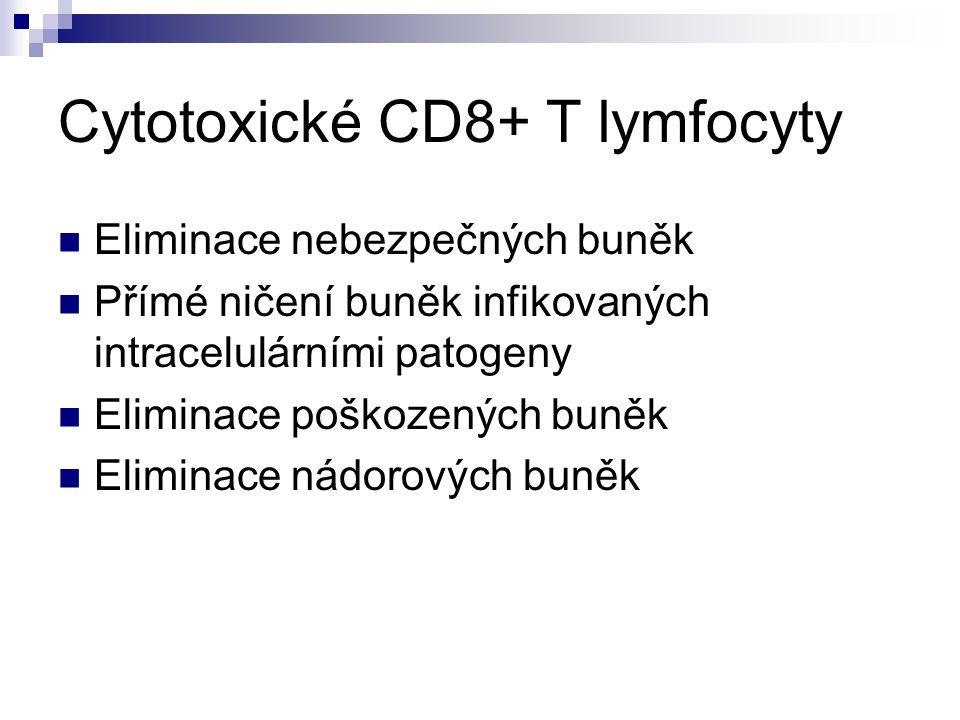 Cytotoxické CD8+ T lymfocyty
