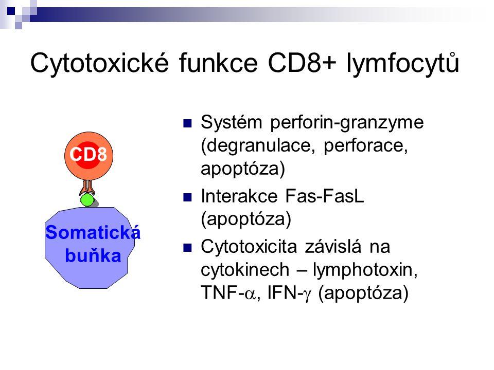 Cytotoxické funkce CD8+ lymfocytů
