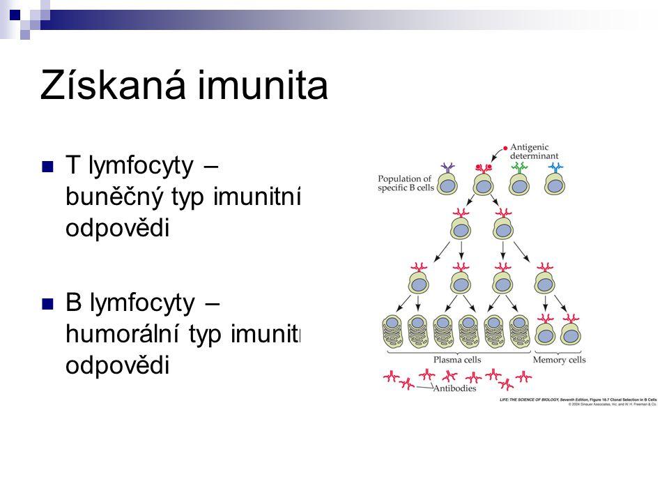 Získaná imunita T lymfocyty – buněčný typ imunitní odpovědi