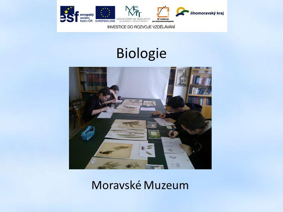 Biologie Moravské Muzeum 8