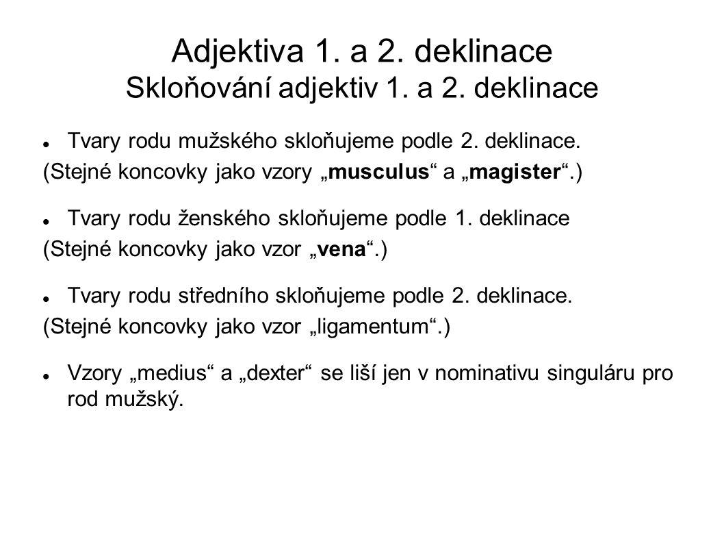 Adjektiva 1. a 2. deklinace Skloňování adjektiv 1. a 2. deklinace
