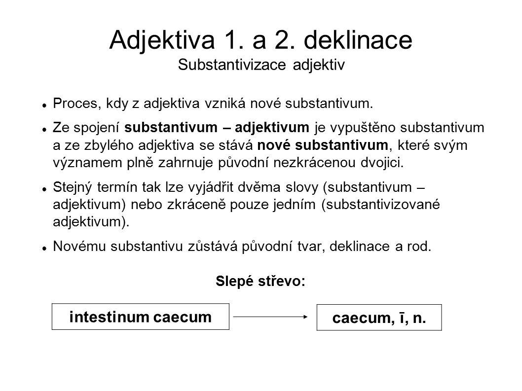 Adjektiva 1. a 2. deklinace Substantivizace adjektiv