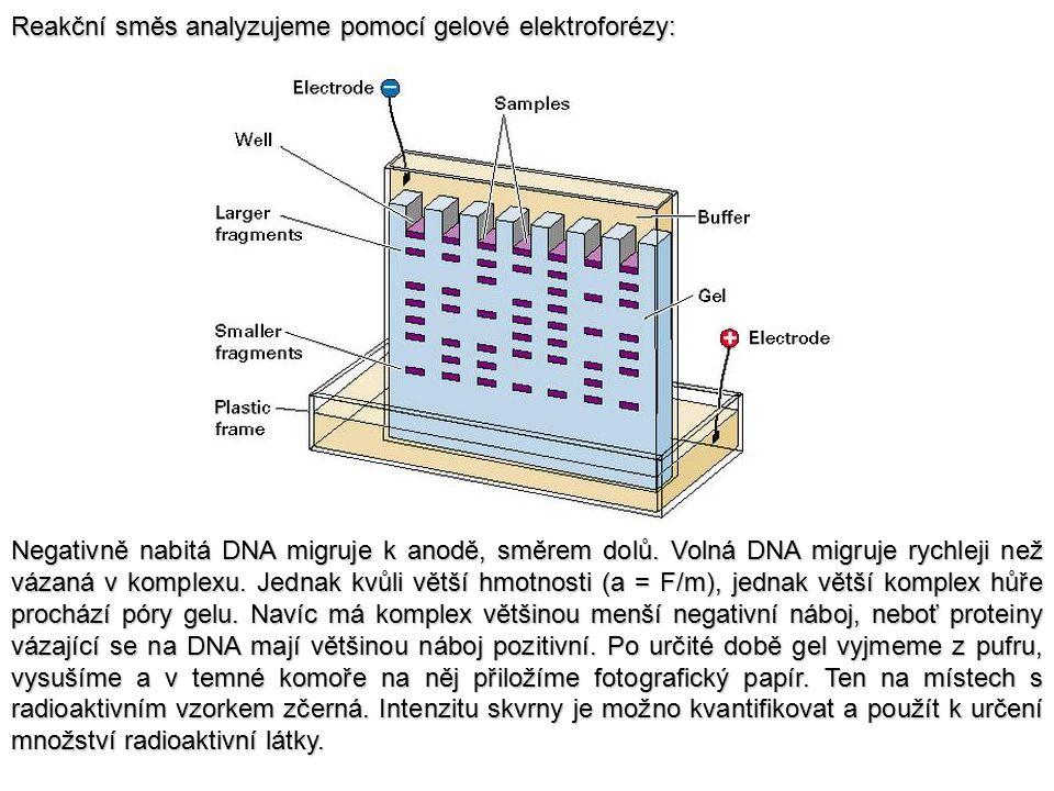 Reakční směs analyzujeme pomocí gelové elektroforézy: