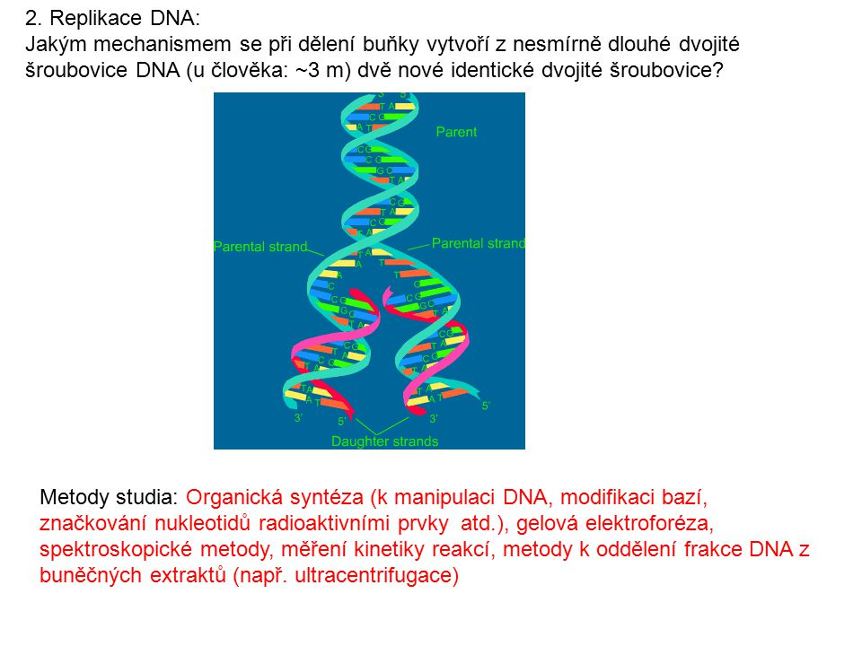 2. Replikace DNA: