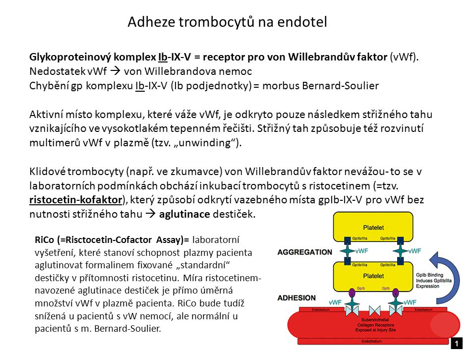 Adheze trombocytů na endotel