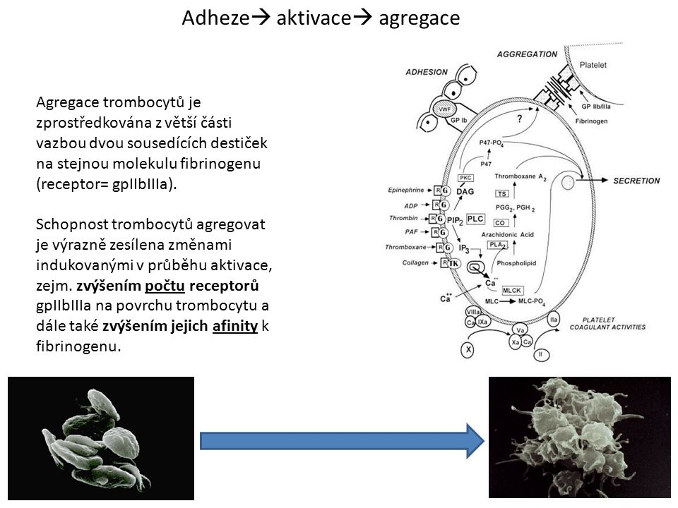 Adheze aktivace agregace