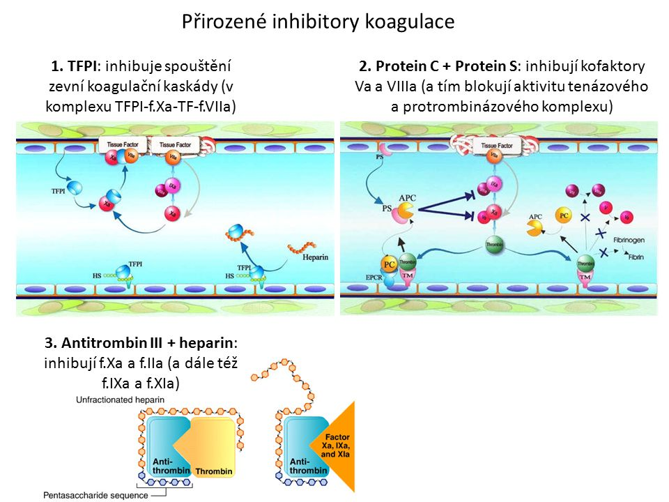 Přirozené inhibitory koagulace