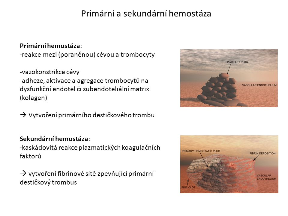 Primární a sekundární hemostáza