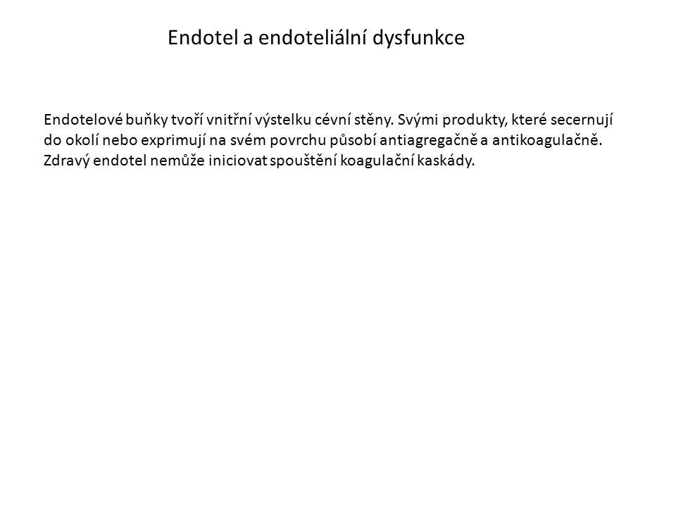 Endotel a endoteliální dysfunkce