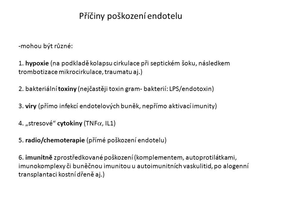 Příčiny poškození endotelu