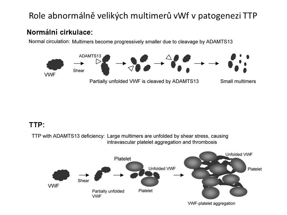 Role abnormálně velikých multimerů vWf v patogenezi TTP