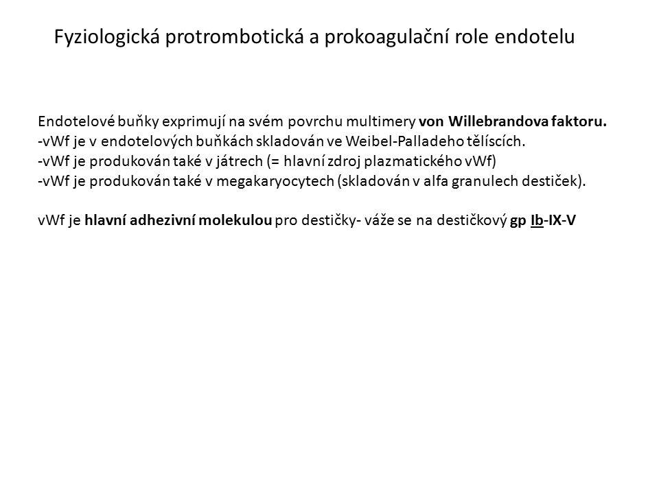 Fyziologická protrombotická a prokoagulační role endotelu