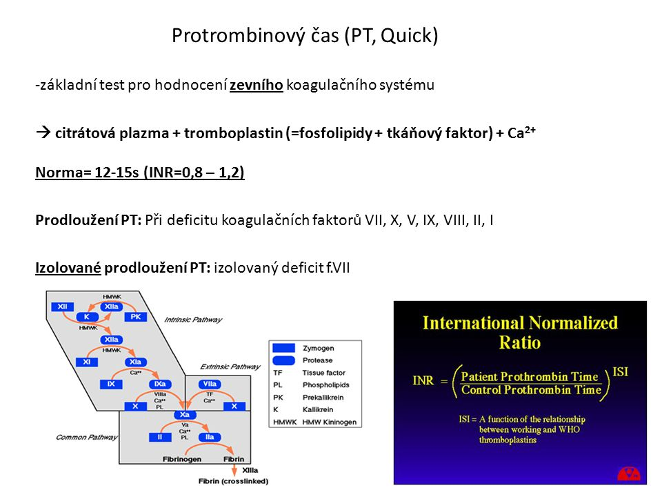 Protrombinový čas (PT, Quick)