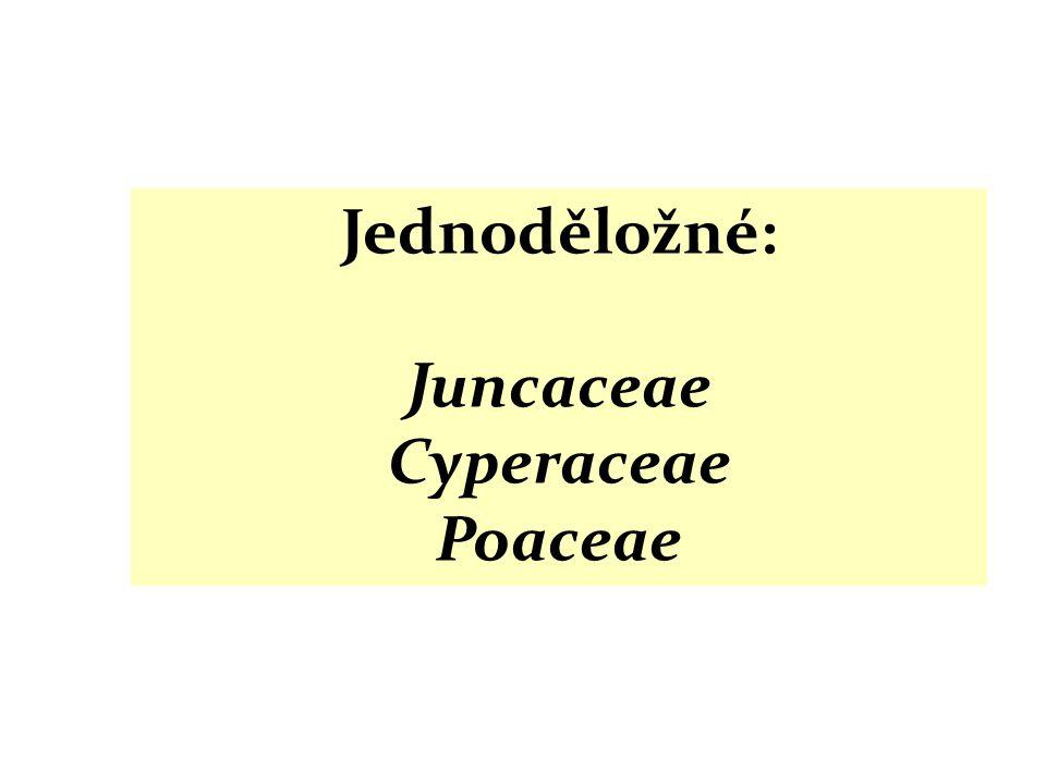 Juncaceae Cyperaceae Poaceae