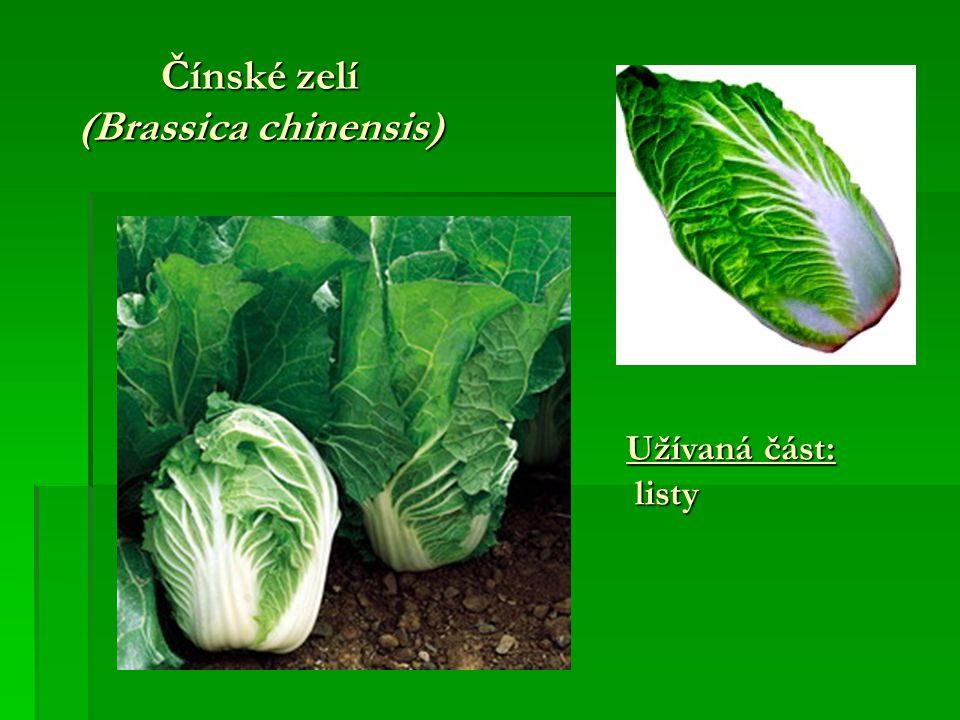 Čínské zelí (Brassica chinensis)