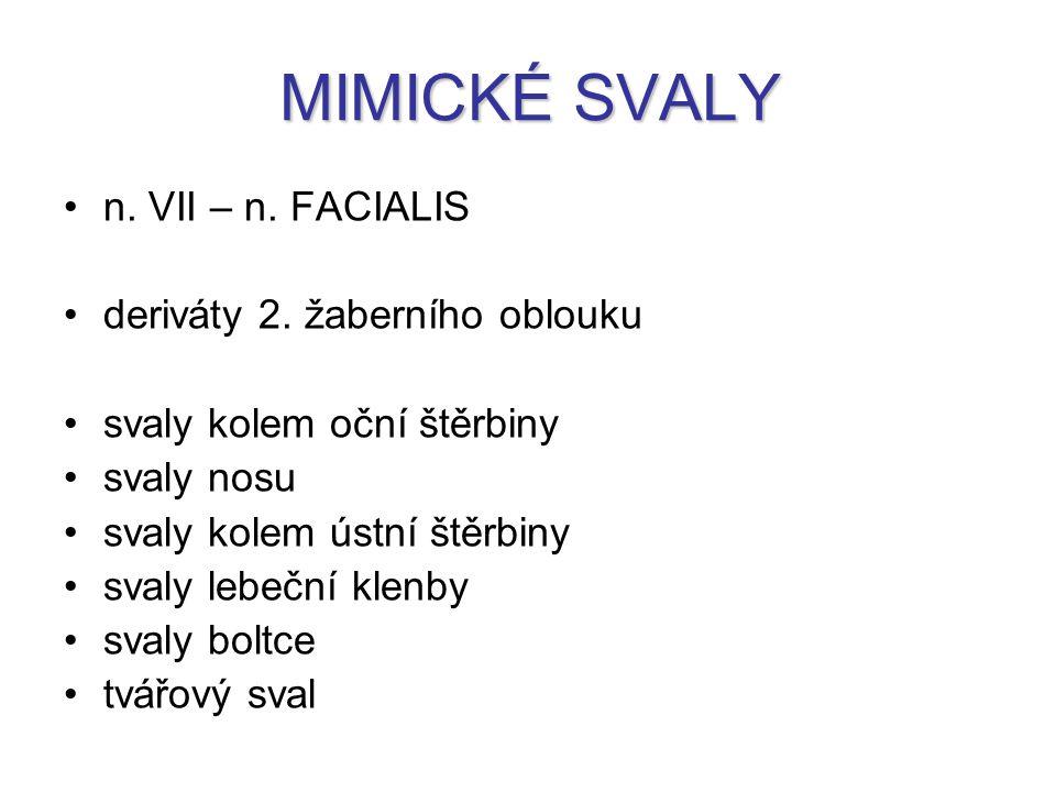 MIMICKÉ SVALY n. VII – n. FACIALIS deriváty 2. žaberního oblouku