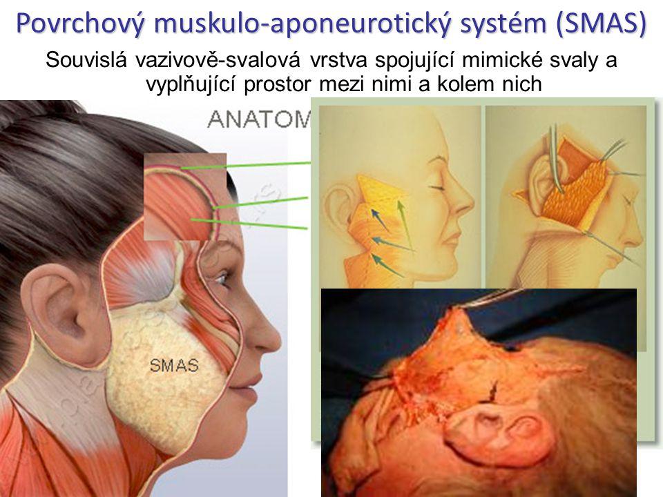 Povrchový muskulo-aponeurotický systém (SMAS)
