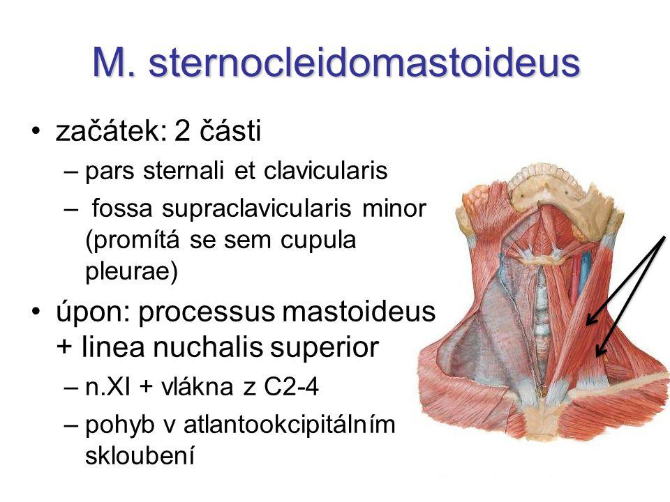 M. sternocleidomastoideus