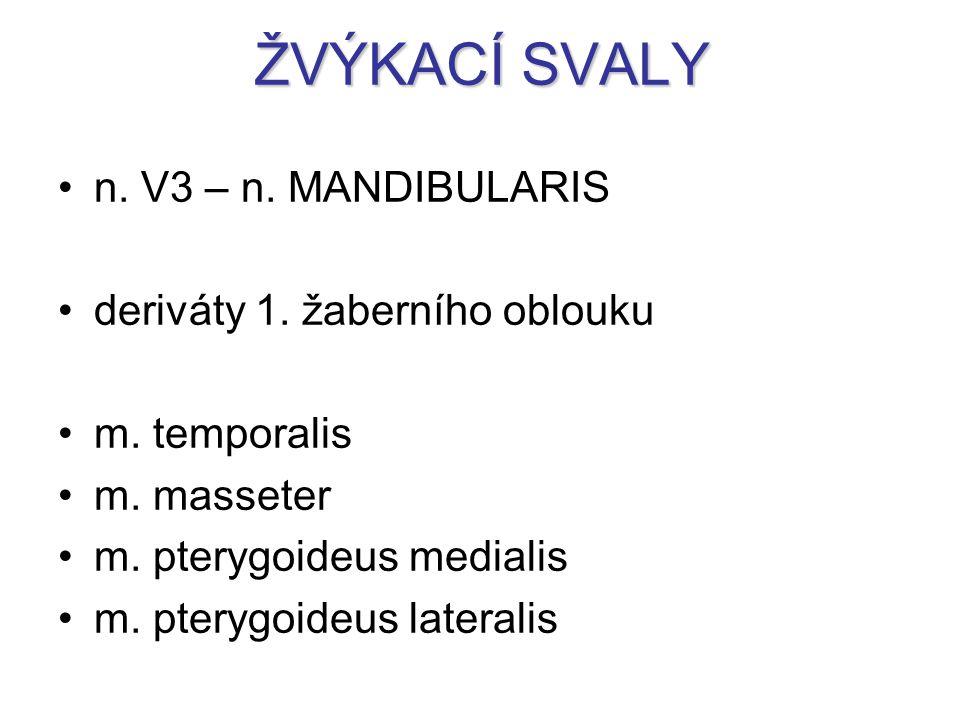 ŽVÝKACÍ SVALY n. V3 – n. MANDIBULARIS deriváty 1. žaberního oblouku