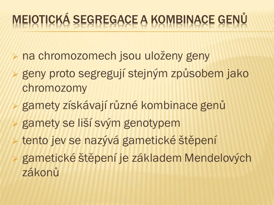 meiotická segregace a kombinace genů