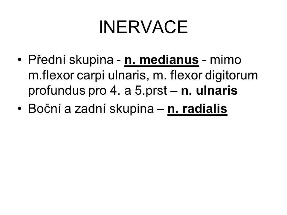 INERVACE Přední skupina - n. medianus - mimo m.flexor carpi ulnaris, m. flexor digitorum profundus pro 4. a 5.prst – n. ulnaris.