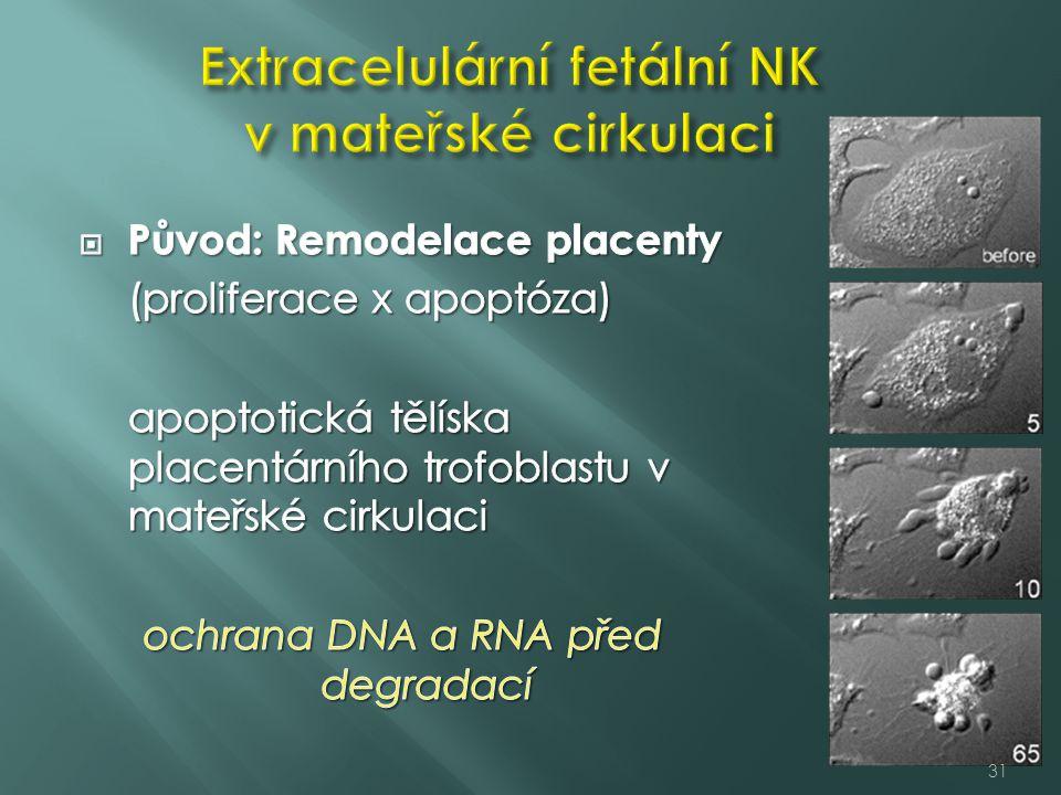 Extracelulární fetální NK v mateřské cirkulaci
