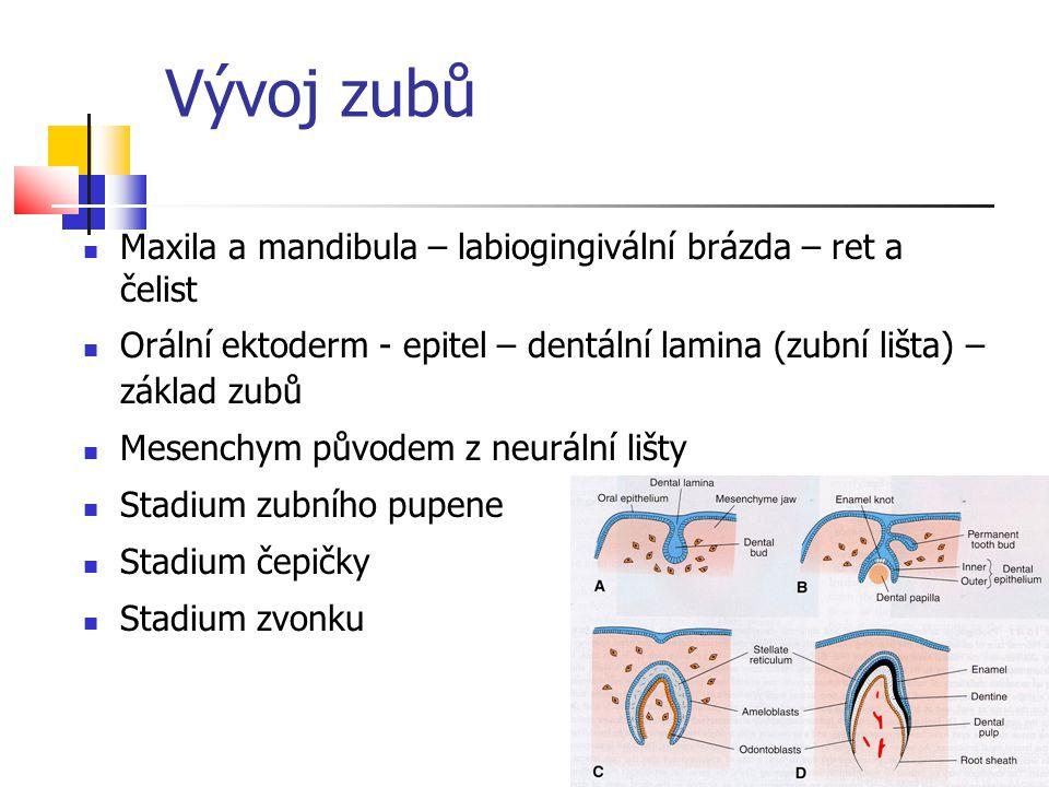 Vývoj zubů Maxila a mandibula – labiogingivální brázda – ret a čelist