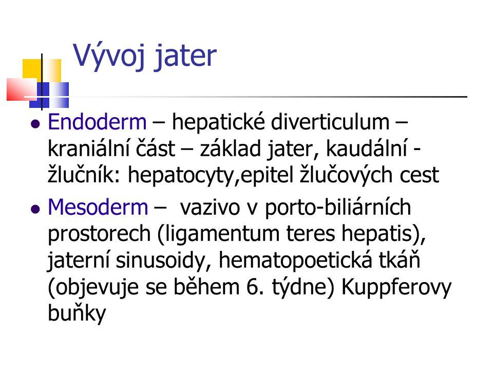 Vývoj jater Endoderm – hepatické diverticulum – kraniální část – základ jater, kaudální - žlučník: hepatocyty,epitel žlučových cest.