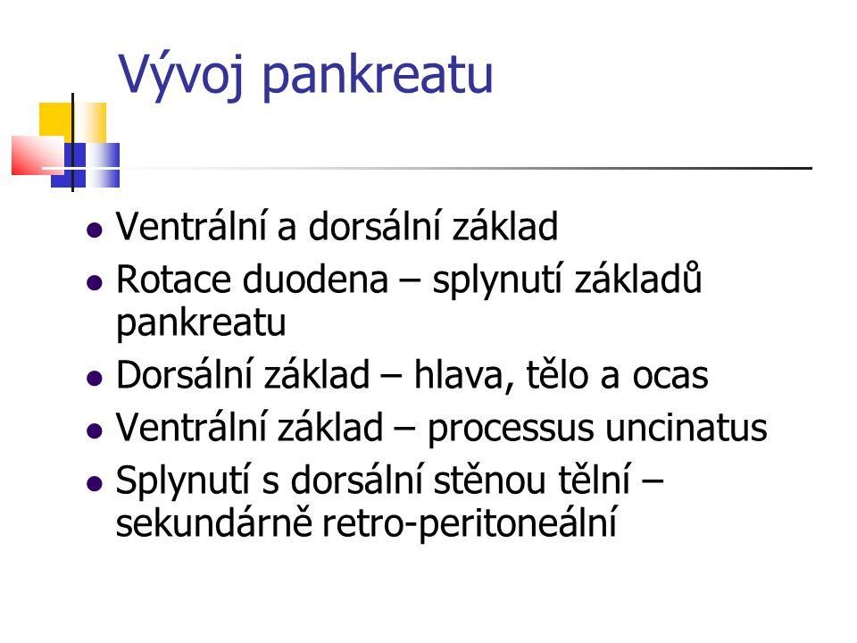 Vývoj pankreatu Ventrální a dorsální základ