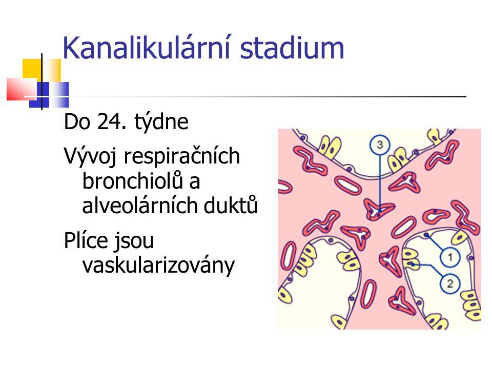 Kanalikulární stadium