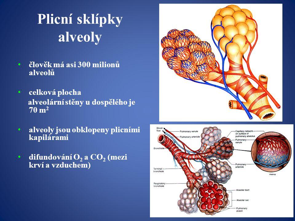 Plicní sklípky alveoly