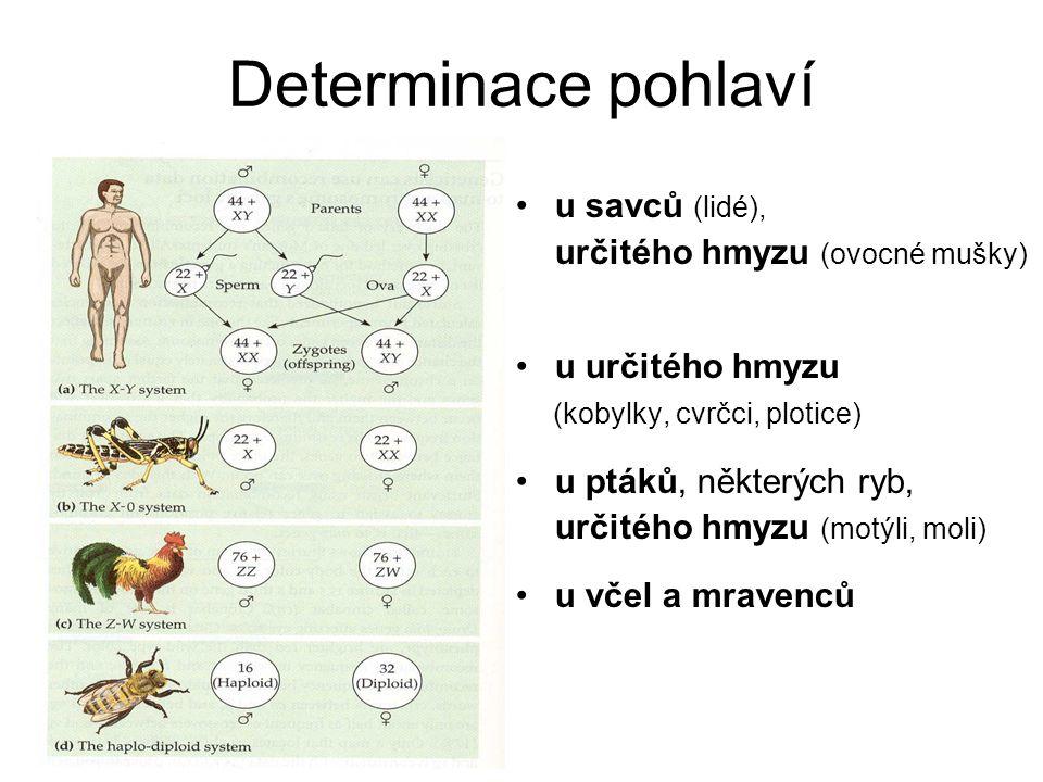 Determinace pohlaví u savců (lidé), určitého hmyzu (ovocné mušky)