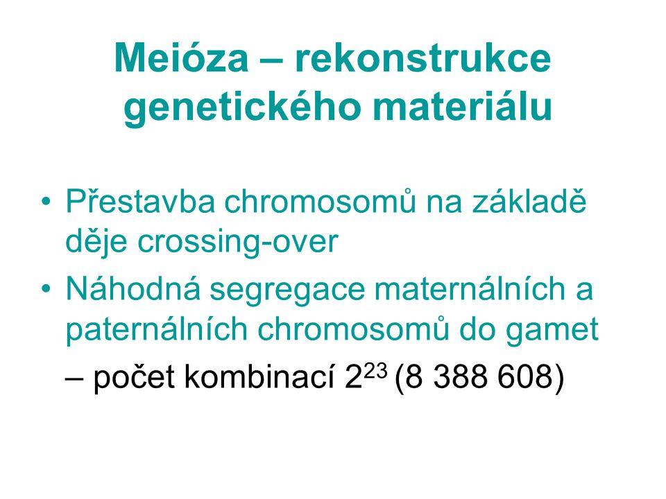 Meióza – rekonstrukce genetického materiálu