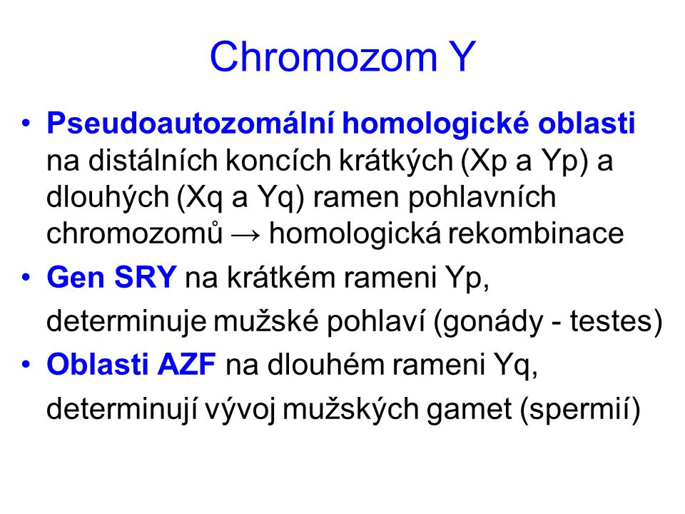 Chromozom Y